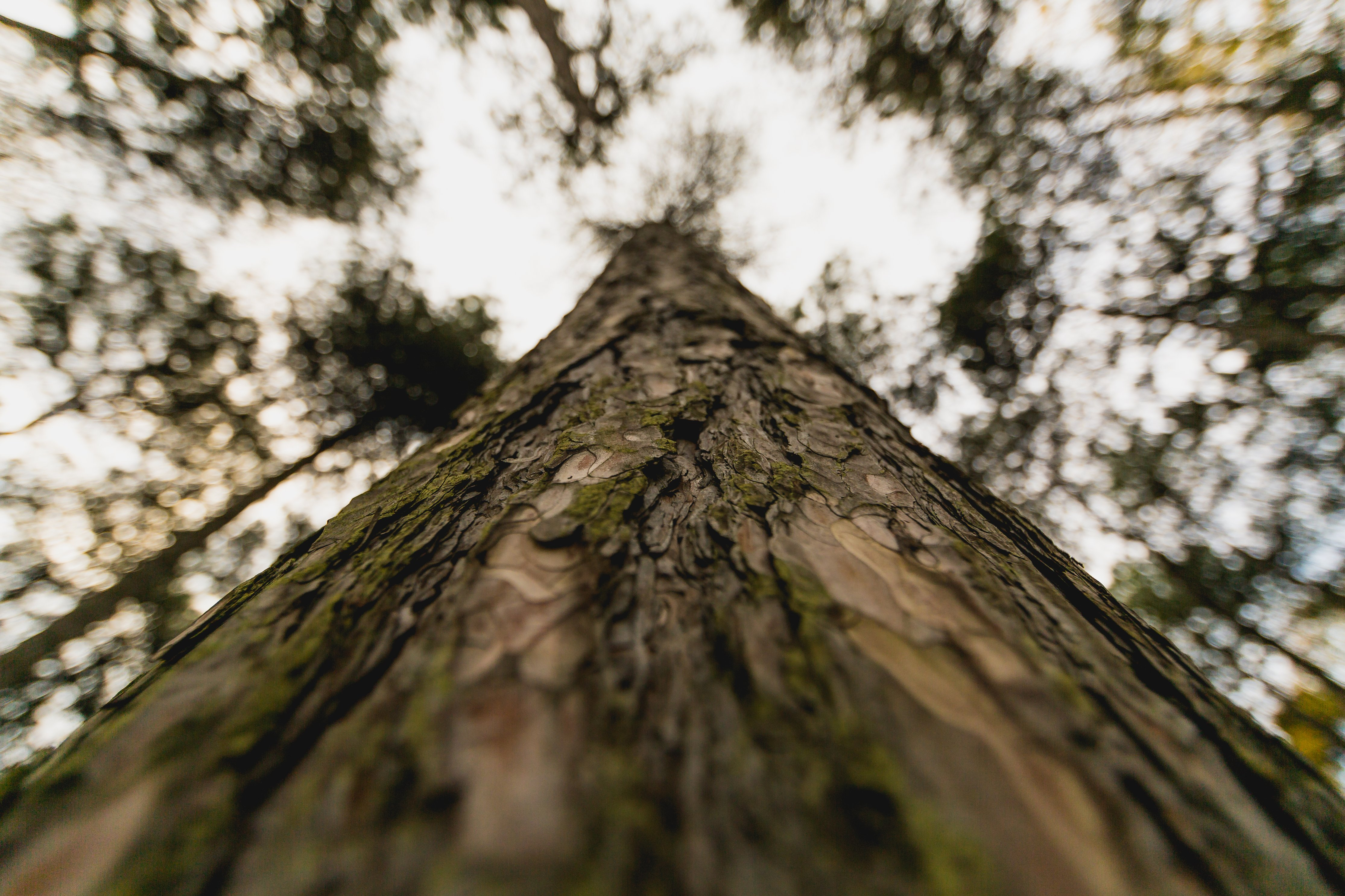 tall-tree-trunk-close-up_4460x4460